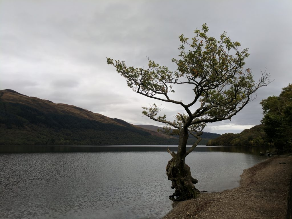 A tree stands alone, reaching out over Loch Lomond